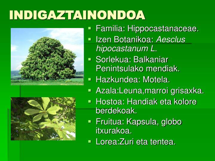 INDIGAZTAINONDOA