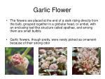 garlic flower