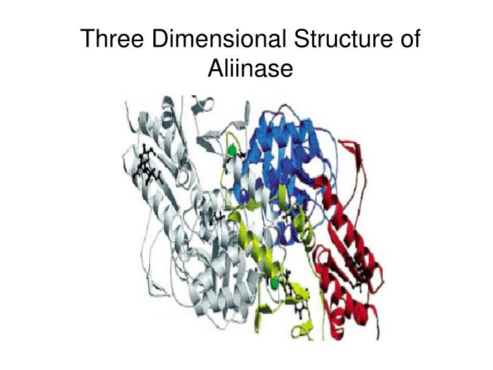 Three Dimensional Structure of Aliinase
