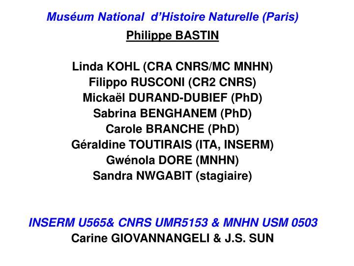 Muséum National  d'Histoire Naturelle (Paris)