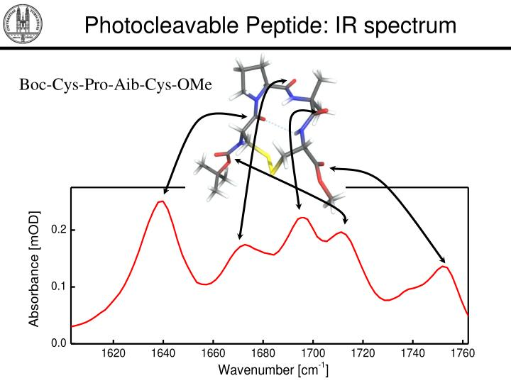Photocleavable Peptide: IR spectrum
