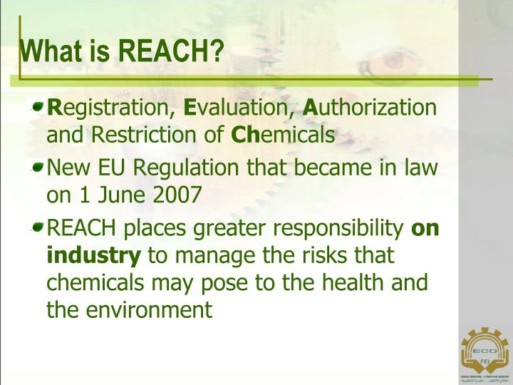 What is REACH?
