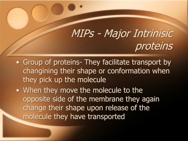 MIPs - Major Intrinisic proteins