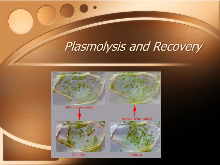 Plasmolysis and Recovery