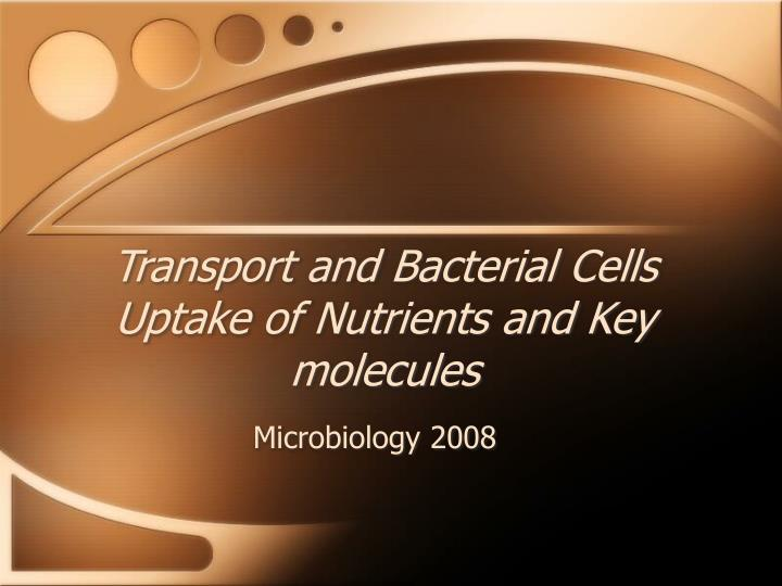 Transport and bacterial cells uptake of nutrients and key molecules