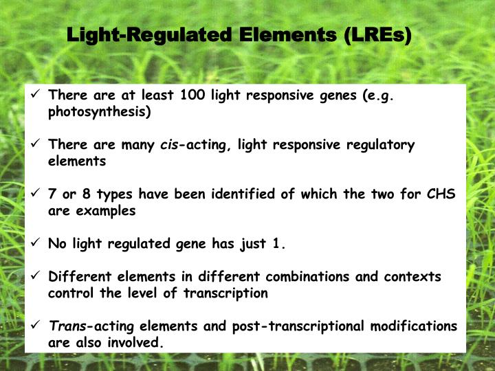 Light-Regulated Elements (LREs)