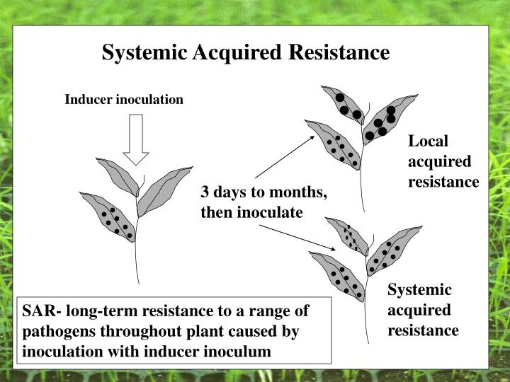 Systemic Acquired Resistance