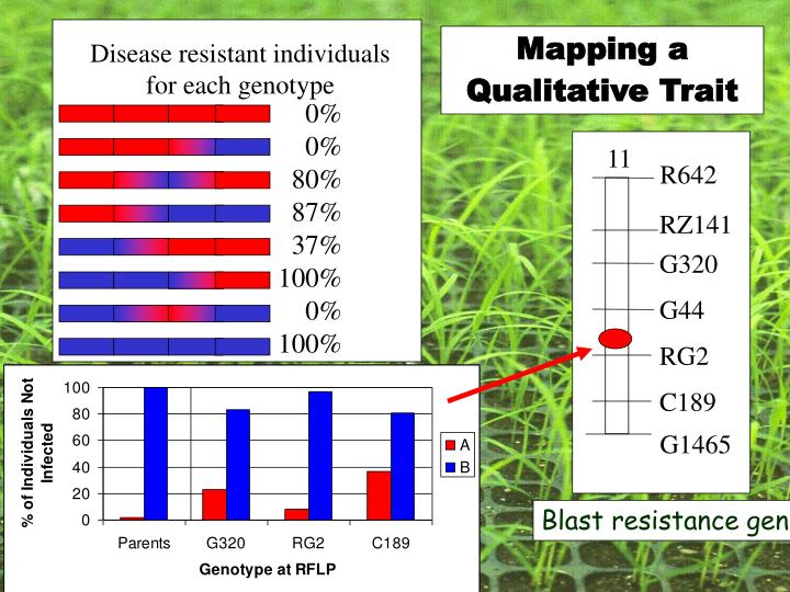 Disease resistant individuals for each genotype