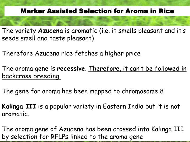 Marker Assisted Selection for Aroma in Rice