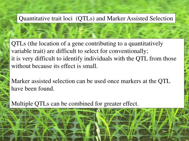 Quantitative trait loci  (QTLs) and Marker Assisted Selection