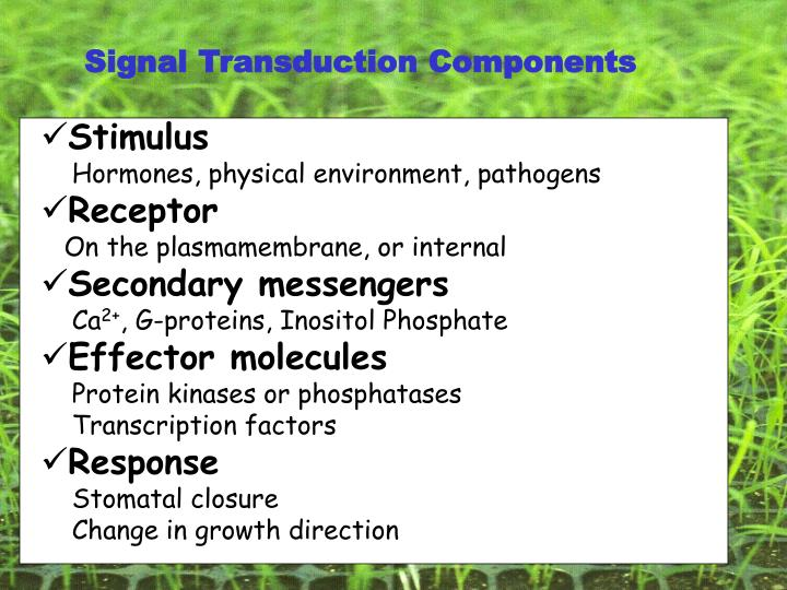 Signal Transduction Components