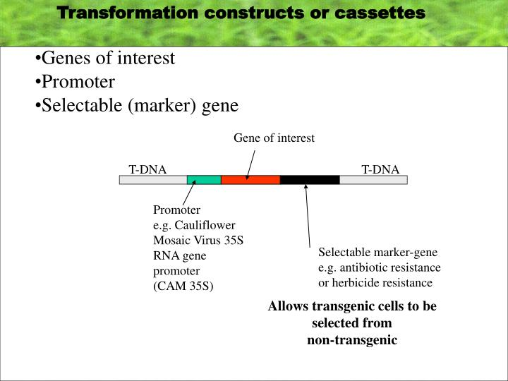 Transformation constructs or