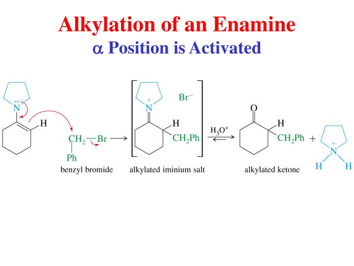 Alkylation of an Enamine