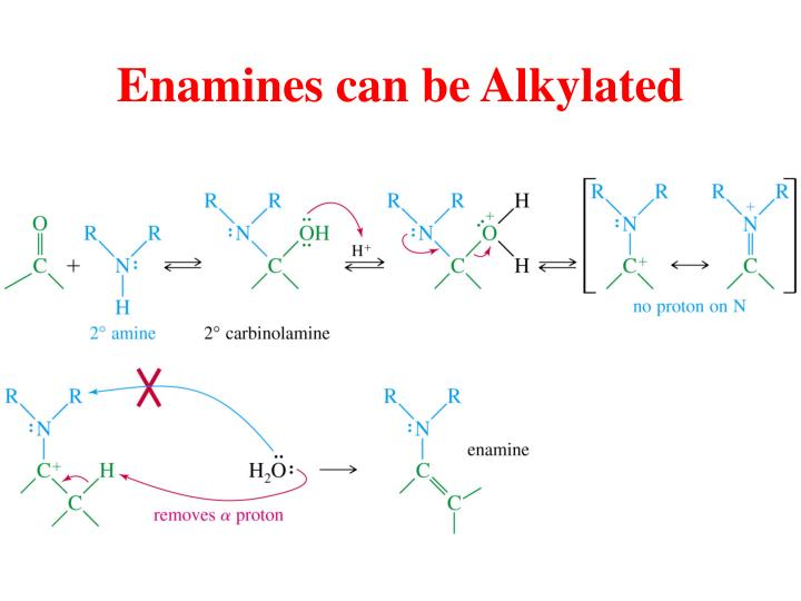 Enamines can be Alkylated