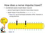 how does a nerve impulse travel3