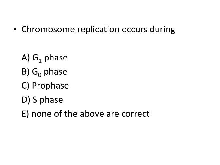 Chromosome replication occurs during