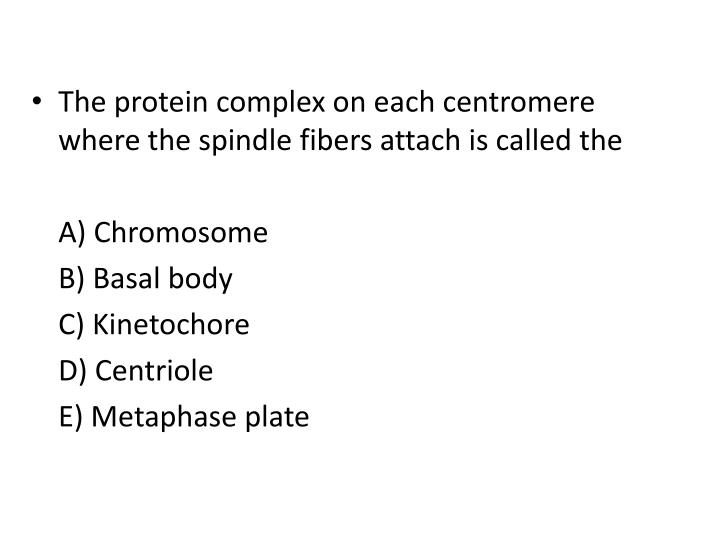 The protein complex on each centromere where the spindle fibers attach is called the