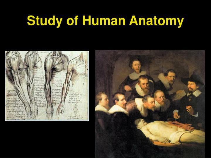 Study of Human Anatomy