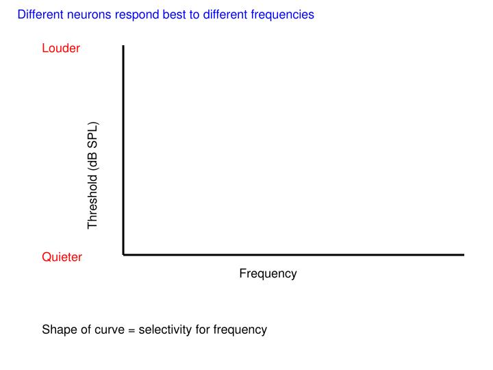 Different neurons respond best to different frequencies
