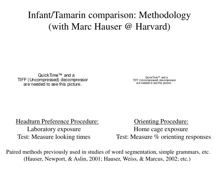Infant/Tamarin comparison: Methodology