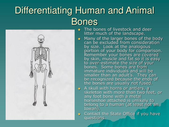 Differentiating Human and Animal Bones