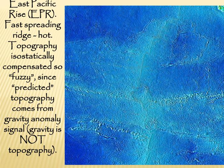 """East Pacific Rise (EPR). Fast spreading ridge - hot. Topography isostatically compensated so """"fuzzy"""", since """"predicted"""" topography comes from gravity anomaly signal (gravity is NOT topography)."""