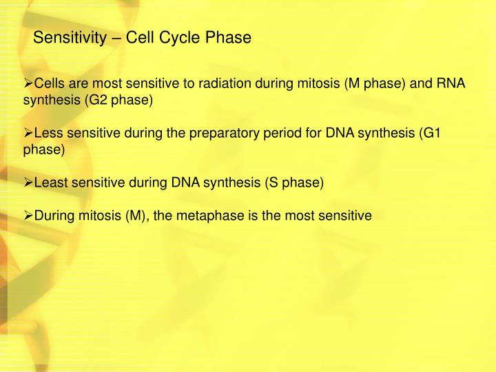 Sensitivity – Cell Cycle Phase