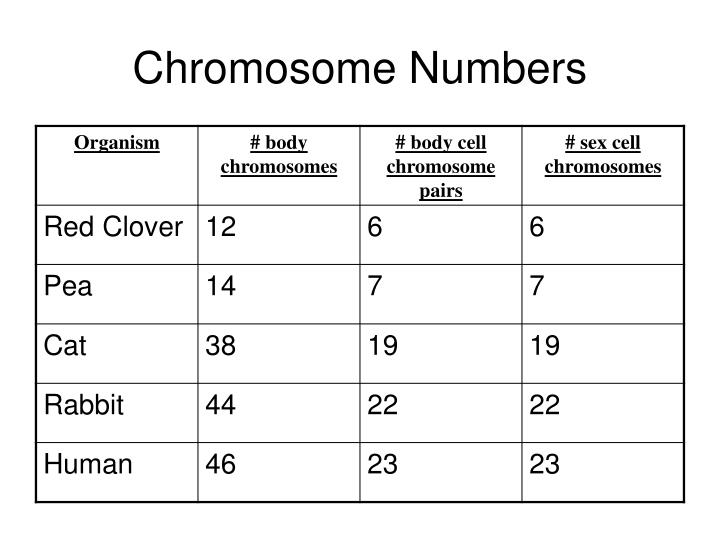 Chromosome Numbers