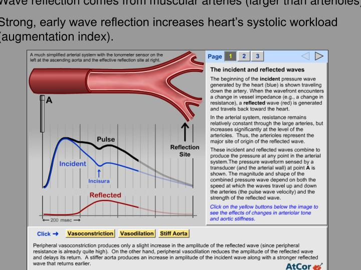 Wave reflection comes from muscular arteries (larger than arterioles).