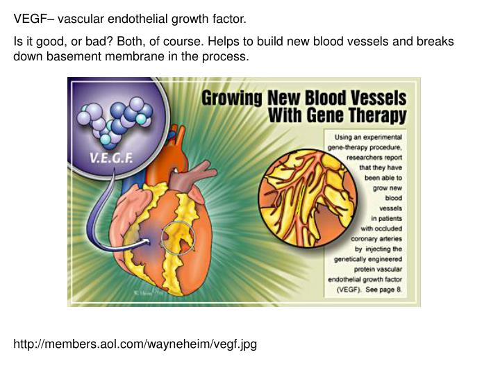 VEGF– vascular endothelial growth factor.