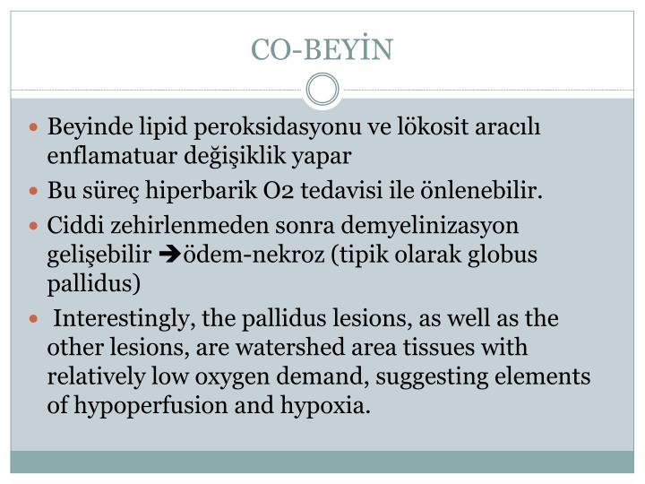 CO-BEYİN