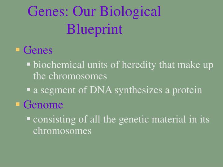 Genes: Our Biological Blueprint