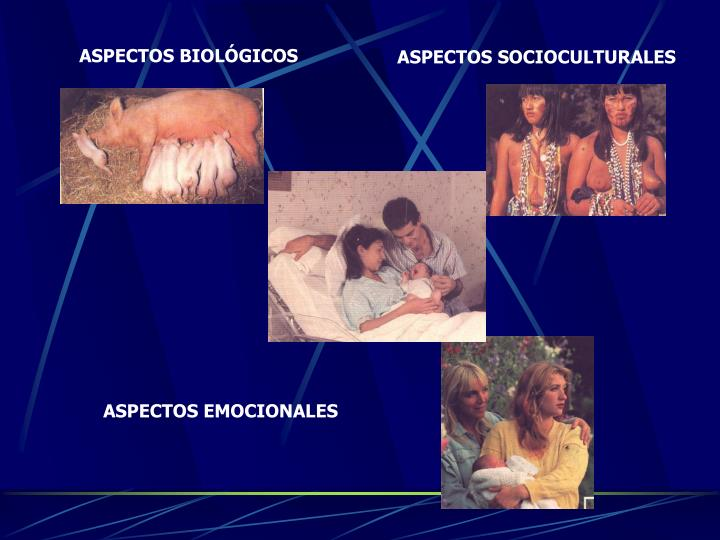ASPECTOS BIOLÓGICOS