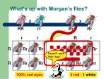 what s up with morgan s flies
