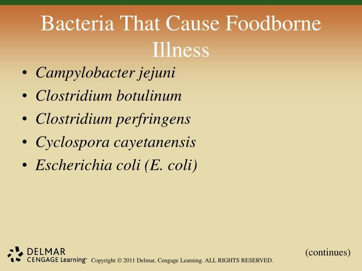 Bacteria That Cause Foodborne Illness