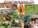 all living things are trying to