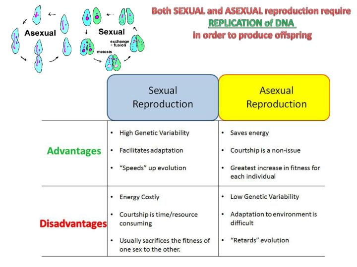 Both SEXUAL and ASEXUAL reproduction require