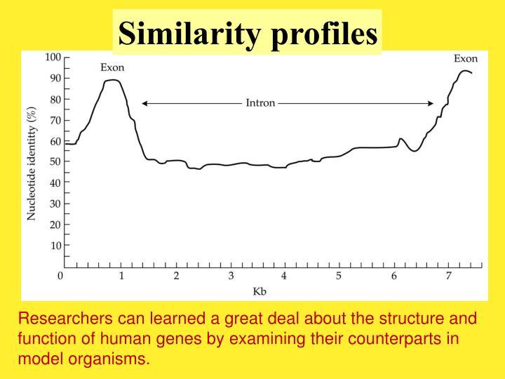 Similarity profiles