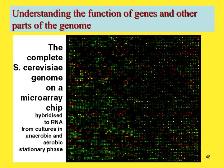 Understanding the function of genes and other parts of the genome