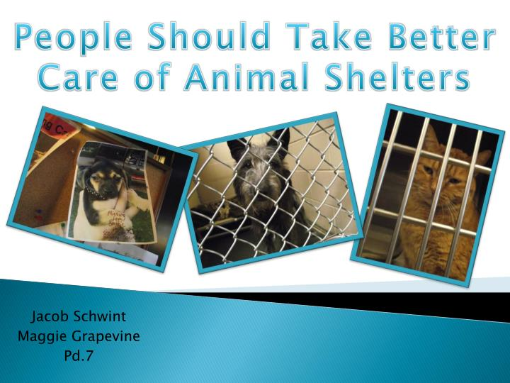 People Should Take Better Care of Animal Shelters