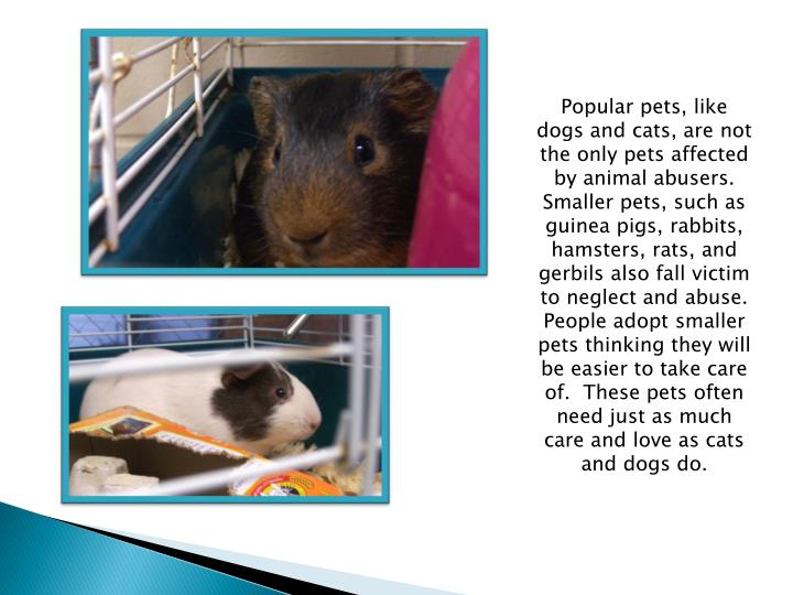 Popular pets, like dogs and cats, are not the only pets affected by animal abusers.  Smaller pets, such as guinea pigs, rabbits, hamsters, rats, and