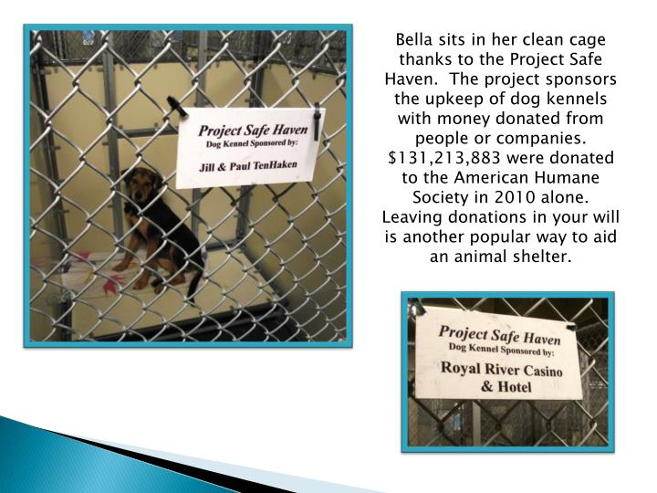 Bella sits in her clean cage thanks to the Project Safe Haven.  The project sponsors the upkeep of dog kennels with money donated from people or companies. $131,213,883 were donated to the American Humane Society in 2010 alone.  Leaving donations in your will is another popular way to aid an animal shelter.