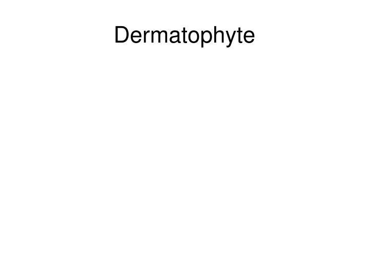 Dermatophyte