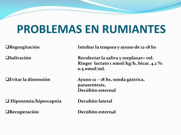 PROBLEMAS EN RUMIANTES
