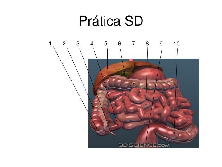 Prática SD