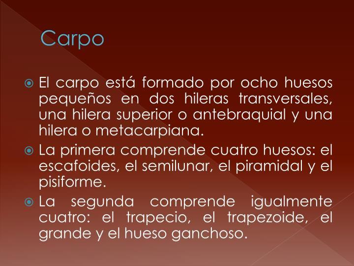 Carpo
