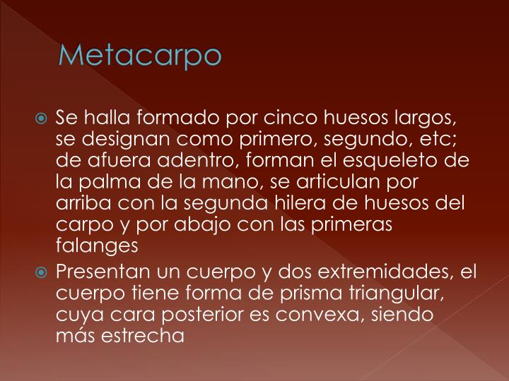 Metacarpo