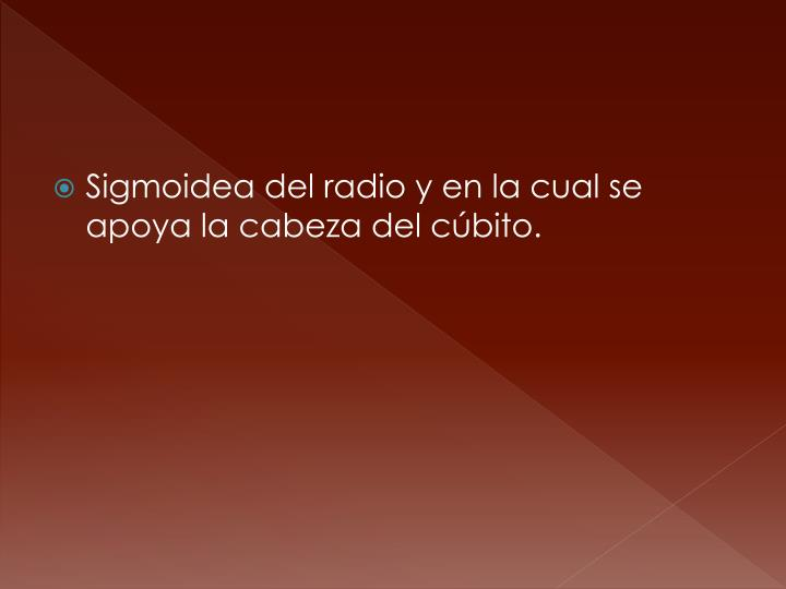 Sigmoidea del radio y en la cual se apoya la cabeza del cúbito.