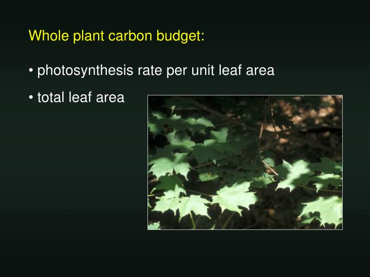 Whole plant carbon budget: