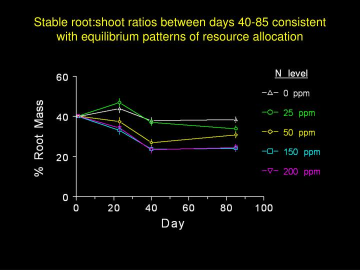 Stable root:shoot ratios between days 40-85 consistent with equilibrium patterns of resource allocation